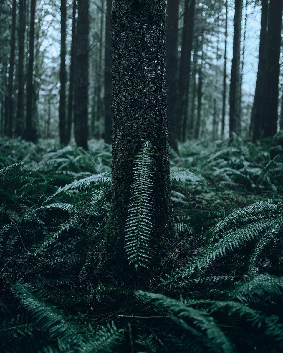Backwoods Exploring 🌿 PC: @FurstyPhoto