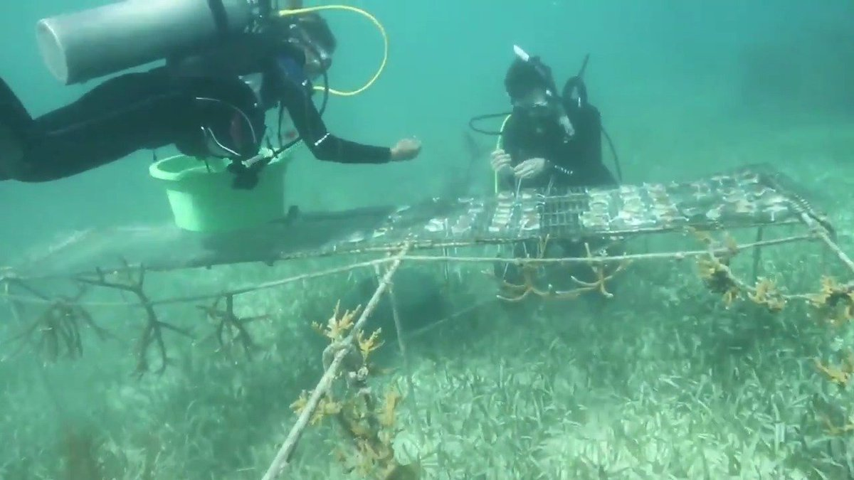 At Carolina, Tar Heels continue to leave their heel print around the world. Discover how this group of @UNC_masc students researched in the Mesoamerican Barrier Reef to hopefully impact future coral reef conservation. https://t.co/zhUEJwgHNd https://t.co/frTF67ddLU
