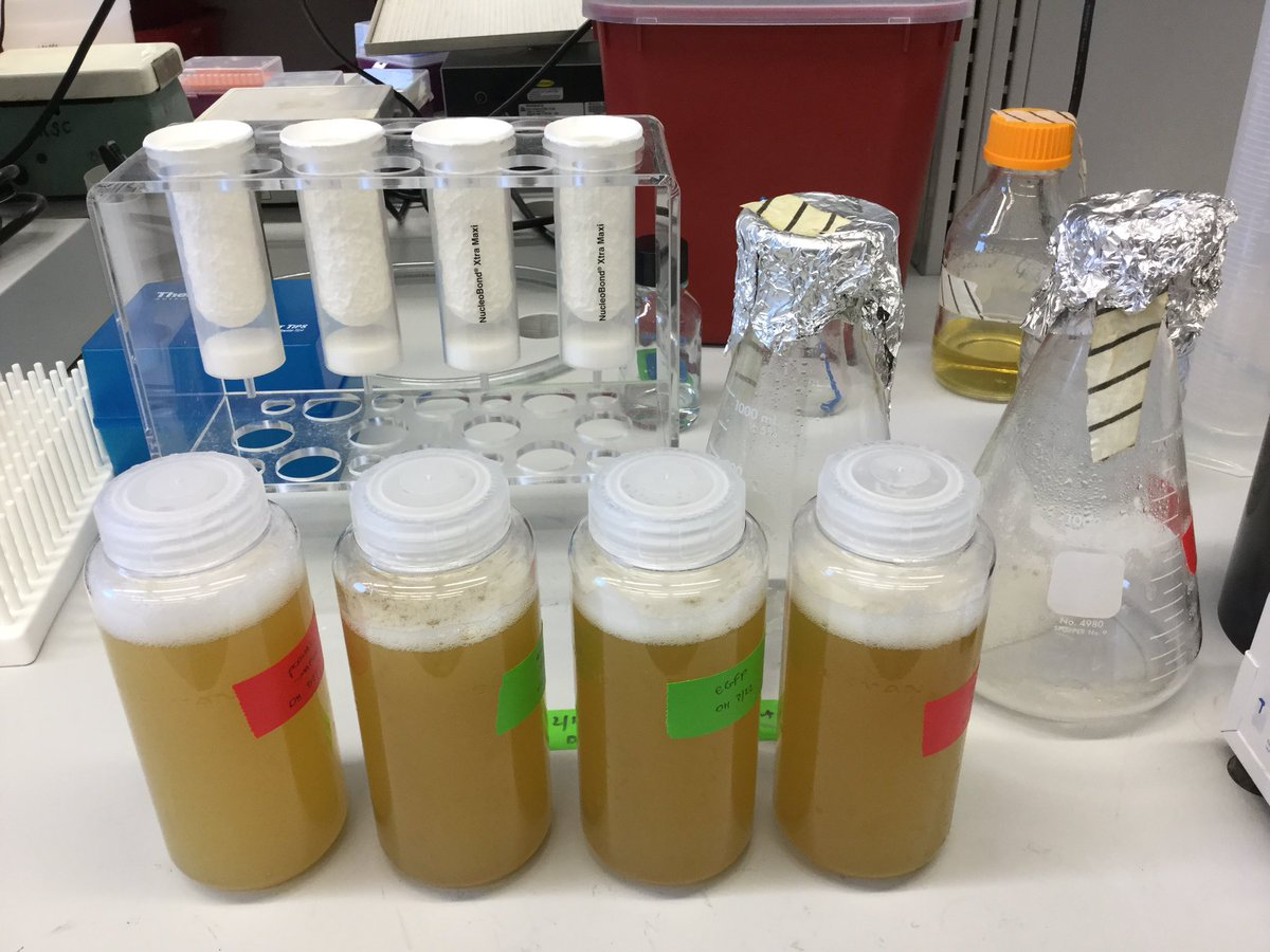 Two days of DNA stock generation, nearly ready to be put into skeletal muscle | #glowingmuscle #atrophy #researchtools  <br>http://pic.twitter.com/RYDoDuZ9Oc &ndash; à Carver Biomedical Research Building