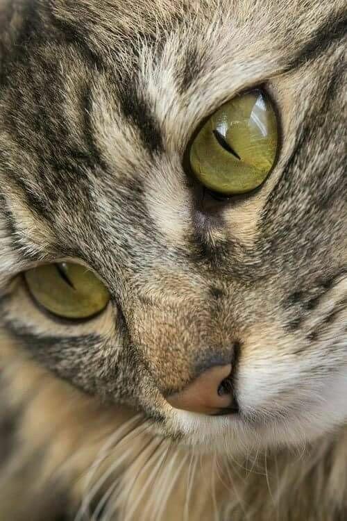 #happythursday #cats 🐾🐾💗🐈🐱❄☀️ https://t....
