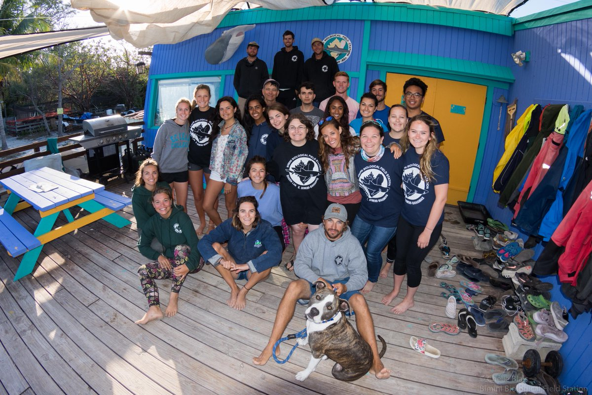 Bimini Sharklab On Insram Our Research Experience Guests Helping Out With A Workup