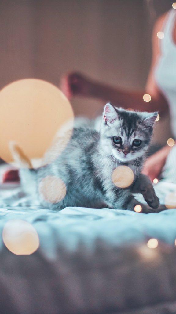 Cate Loves Lilly S Tweet At Brandonwoelfel Soft Kitty Warm