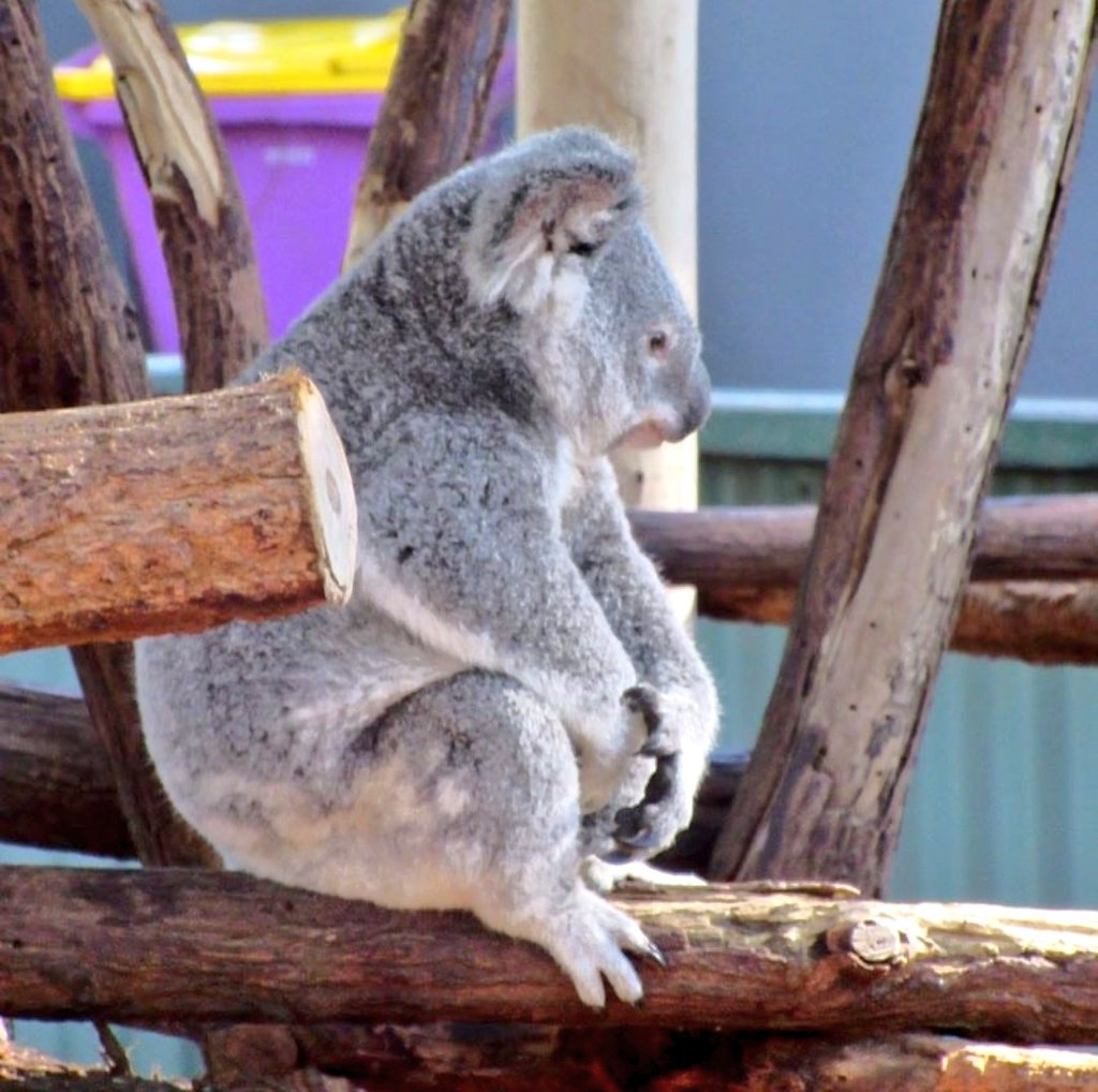 Tube teen koala overview