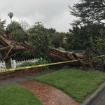 Image for the Tweet beginning: BREAKING: Massive tree falls on