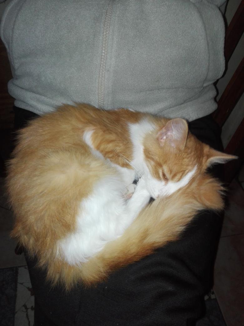 Viernes de gatos #redespiertos el mío el...