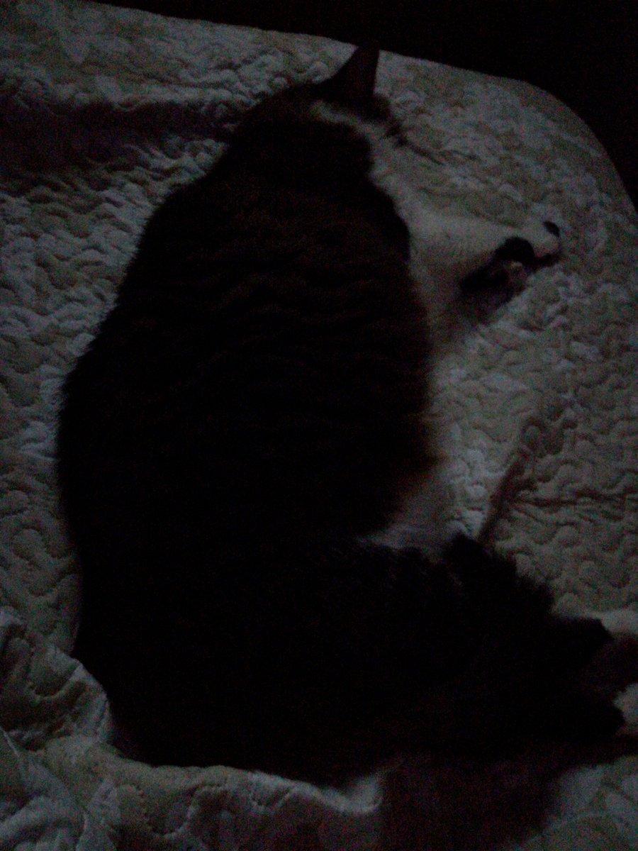 #Redespiertos Noche de gatos 😯 https://t...
