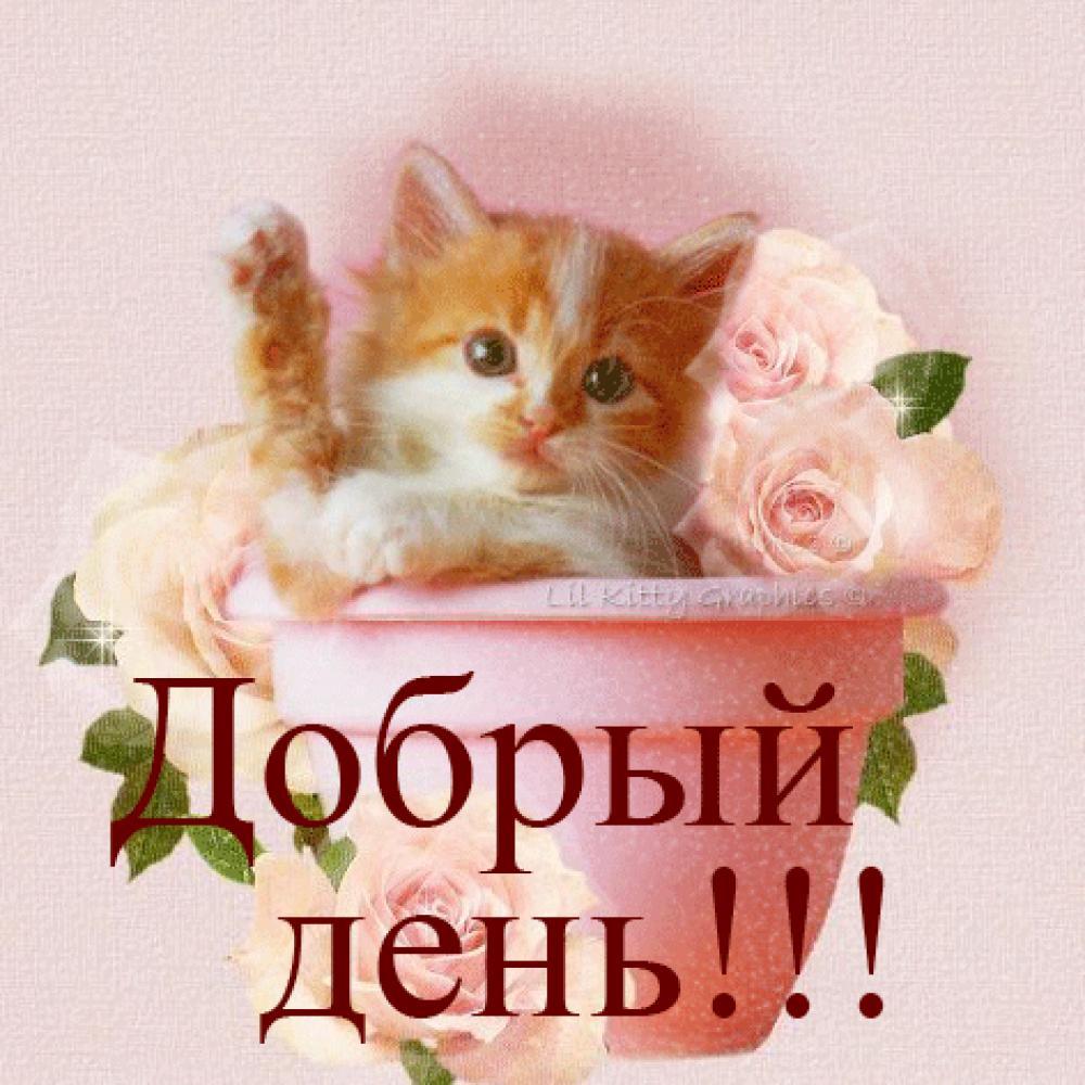 Слова, картинки с надписью добрый день дорогая