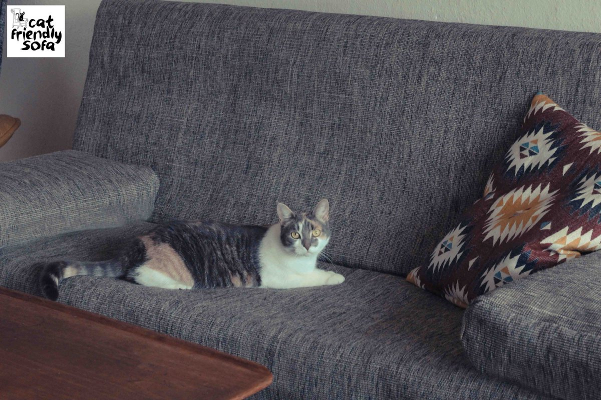 Cat Friendly Sofa