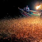 Night fishing is the popular activity in North coast of Taiwan! Come to join us!! 👧🏼👱🏼✨ Billboard! details:https://t.co/o4gQOEDNFl✨win a round trip tickets to Taiwan✈️ & show yourself on Time Square