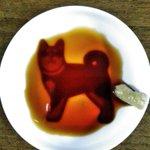 いやわさびの乗せる位置w犬のがらの可愛らしい皿なのにわさびの位置がちょっと問題あるw