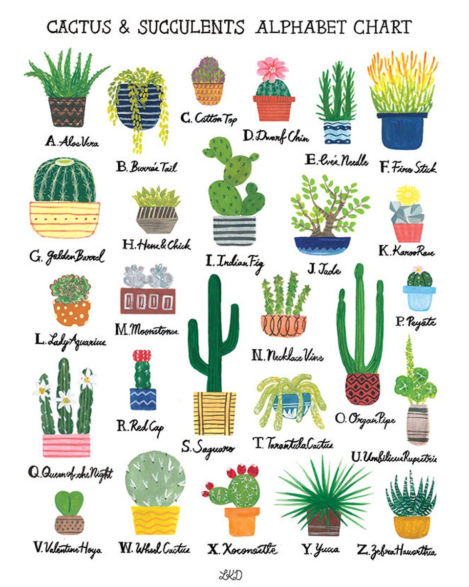 🌵 Know thine succulents. 🌵 https://t.co/...