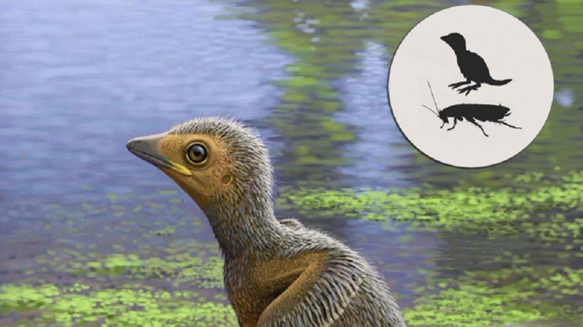 古代に生息していたヒナ鳥、ゴキブリほどの大きさだった模様 #サイエンス https://t.co/FNgByV3JDE
