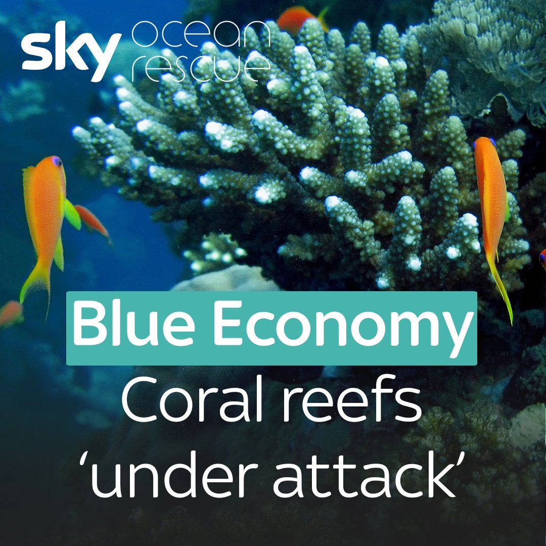 Here's how coral reef gardens are helpin...