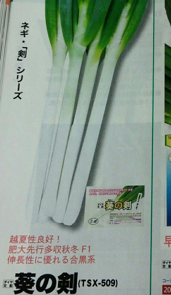 野菜のカタログ見てるんだけど 長ネギの名前が魔王討伐できそうで、ヤバイ、好き、装備したい。