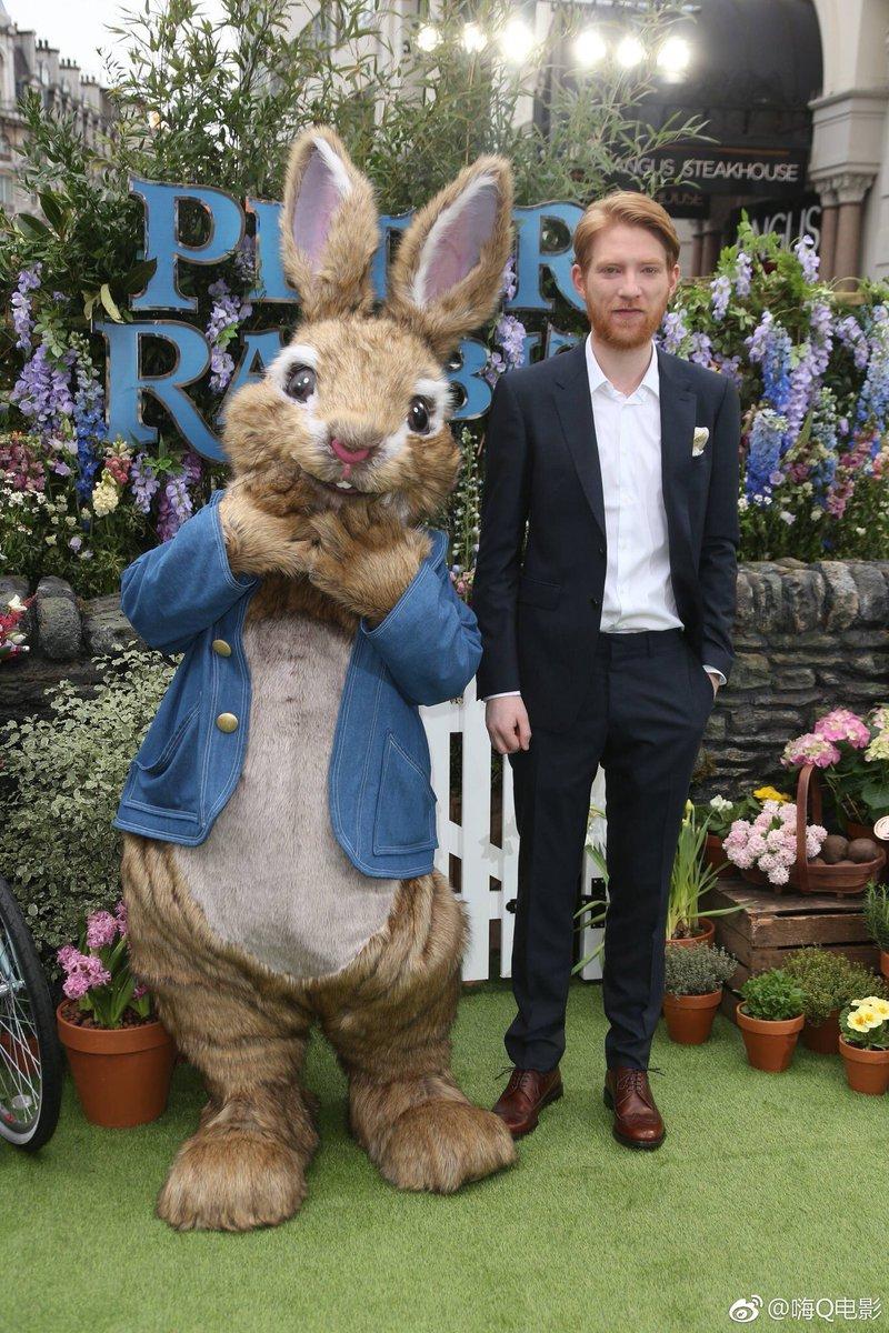 まるで別のウサギじゃねーか!! 恐ろしすぎる見た目から進化したピーターラビットがこちらwww