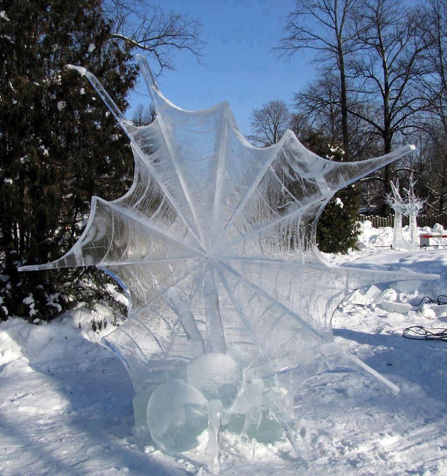Frozen spider web by Luis Trevino 😮❤️