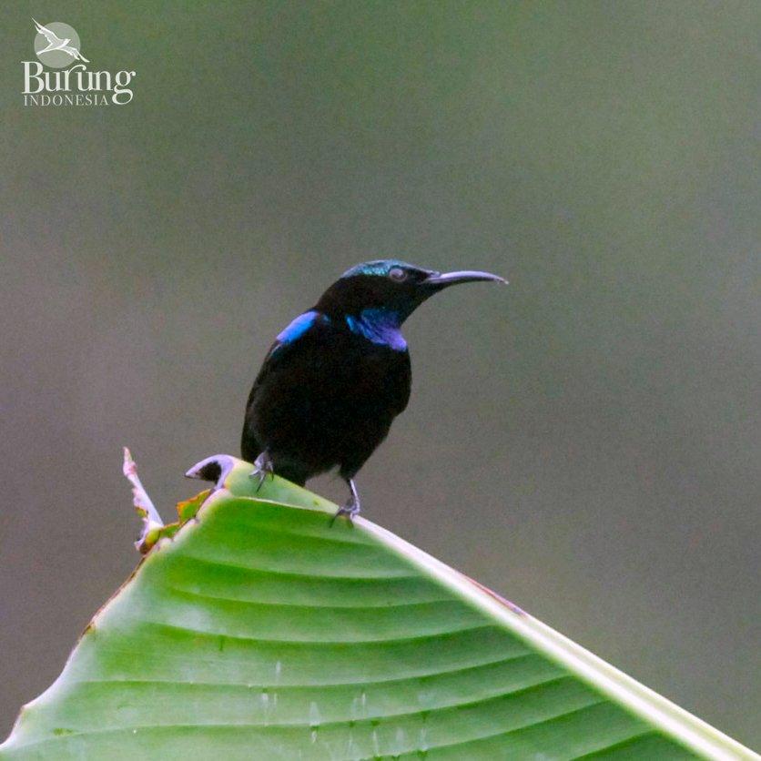 55+  Gambar Burung Yang Dilindungi HD Terbaru Free