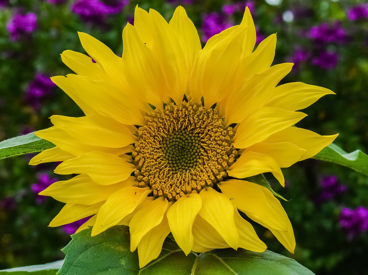 City of lewisville on twitter happy nationalplantaflowerday curious what flowers do best in dfw check out httptxsmartscapeplant searchindexp picitterxyivzqnquz mightylinksfo Images