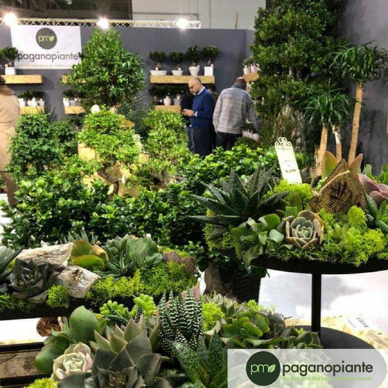 #Etichette per #piante #bomboniera da personalizzare per un #matrimonio su misura: ecco tutte le novità #Paganopiante per i #rivenditori #gardencenter e #vivai https://t.co/TXAFe5g4U2 https://t.co/Pt2kidZtg6