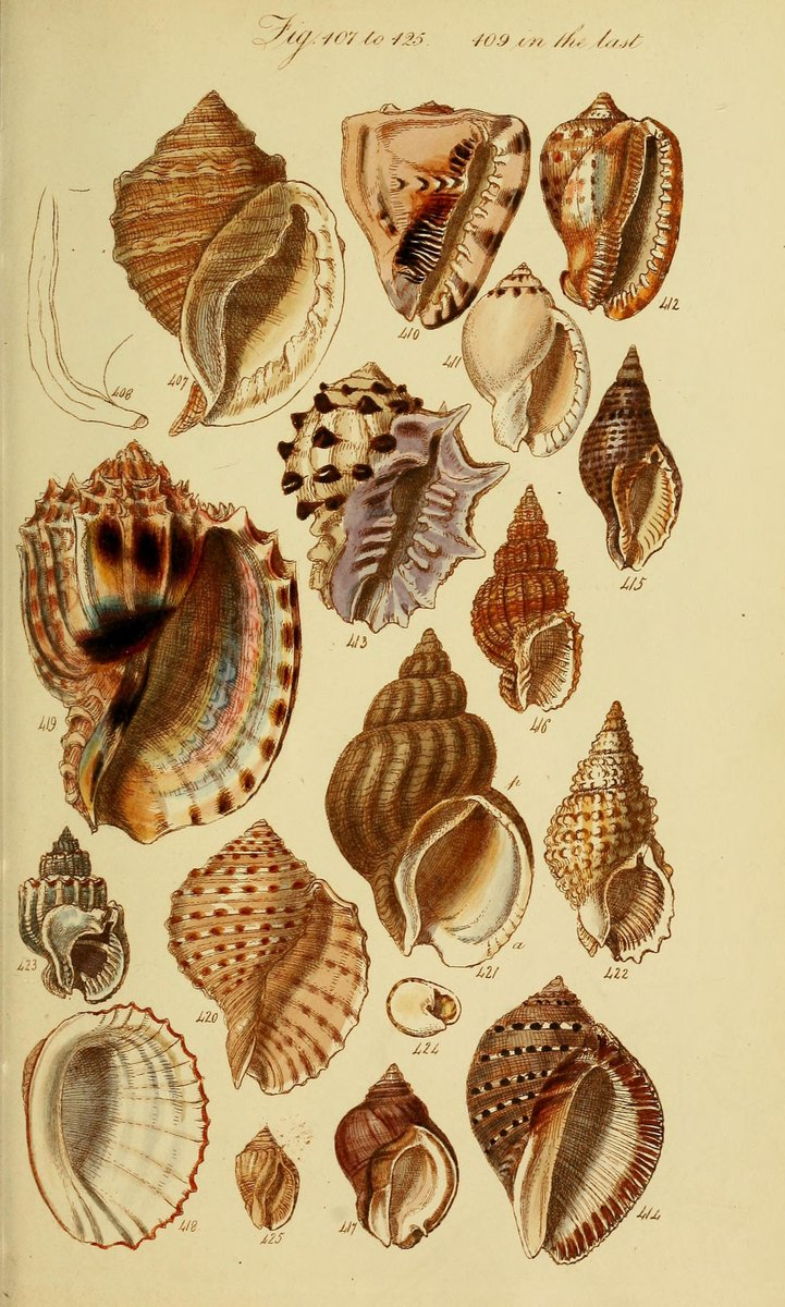 BHL On Twitter Explore Shells For MolluskMonday From A