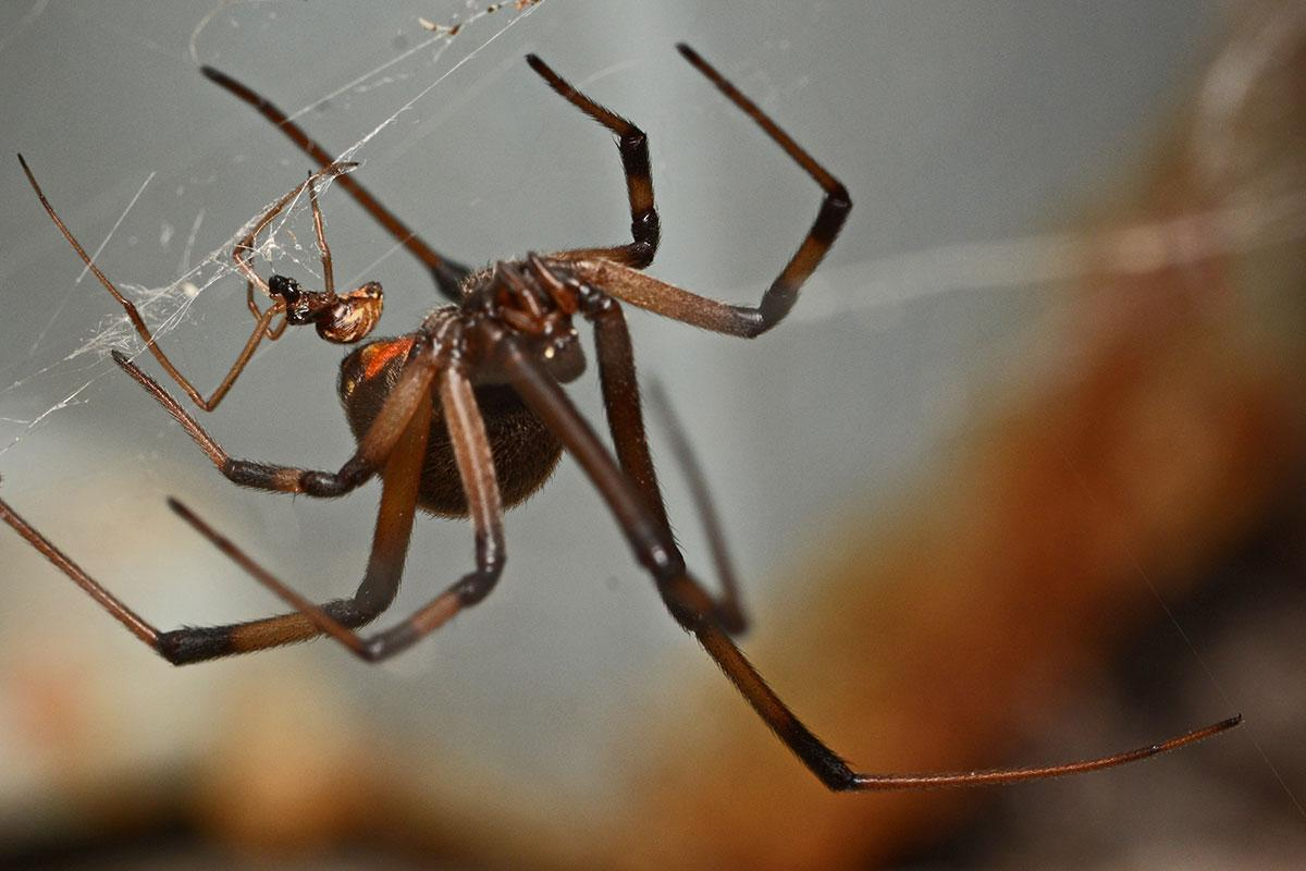 Daft male spiders prefer females who are more likely to eat them bit.ly/2p5WgQP