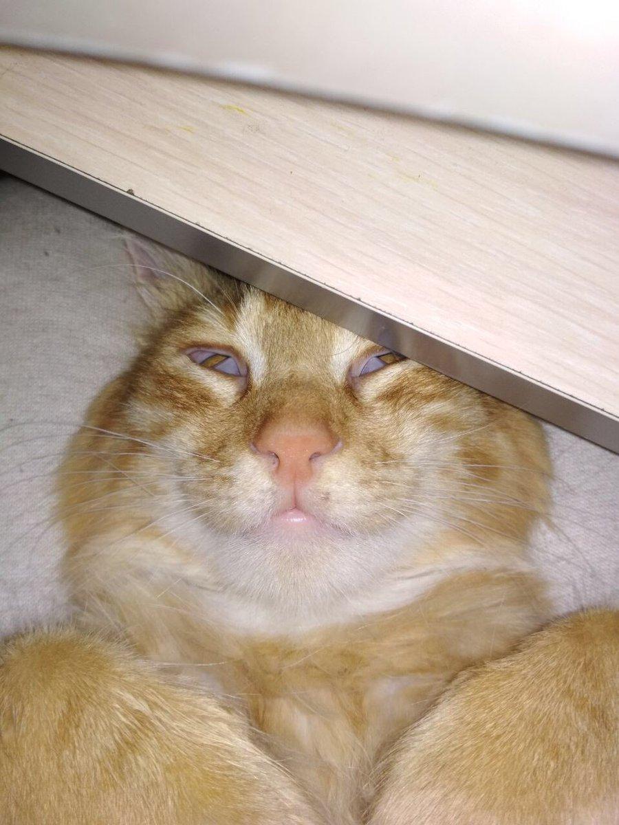 Упоротая картинка с котиком