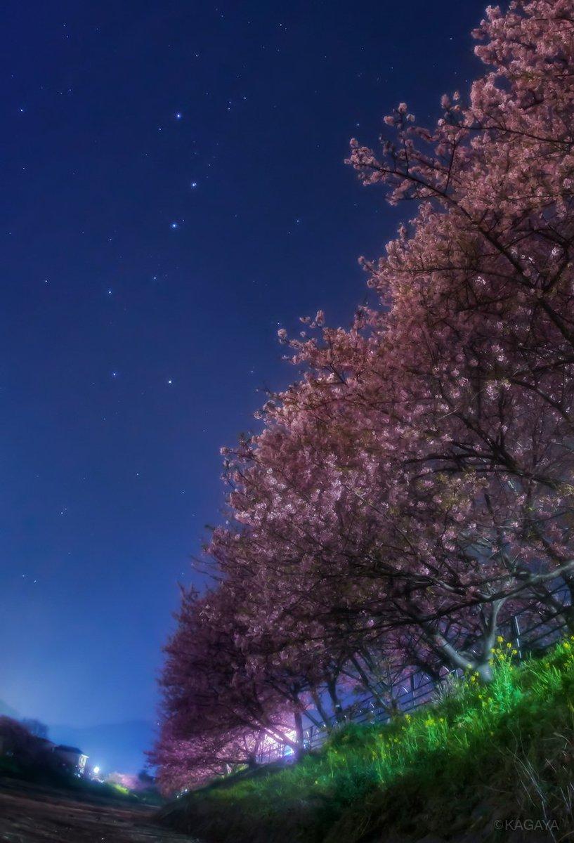 桜と北斗七星の季節。(以前の写真より) 今日もお疲れさまでした。明日もおだやかな1日になりますように。