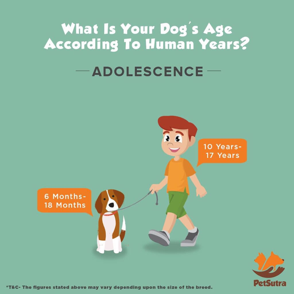 Dogage hashtag on twitter do you know what is your dogs age according to yours check this out pets animals petsutra happiness dogparents puppy adolscent adultdog nvjuhfo Image collections