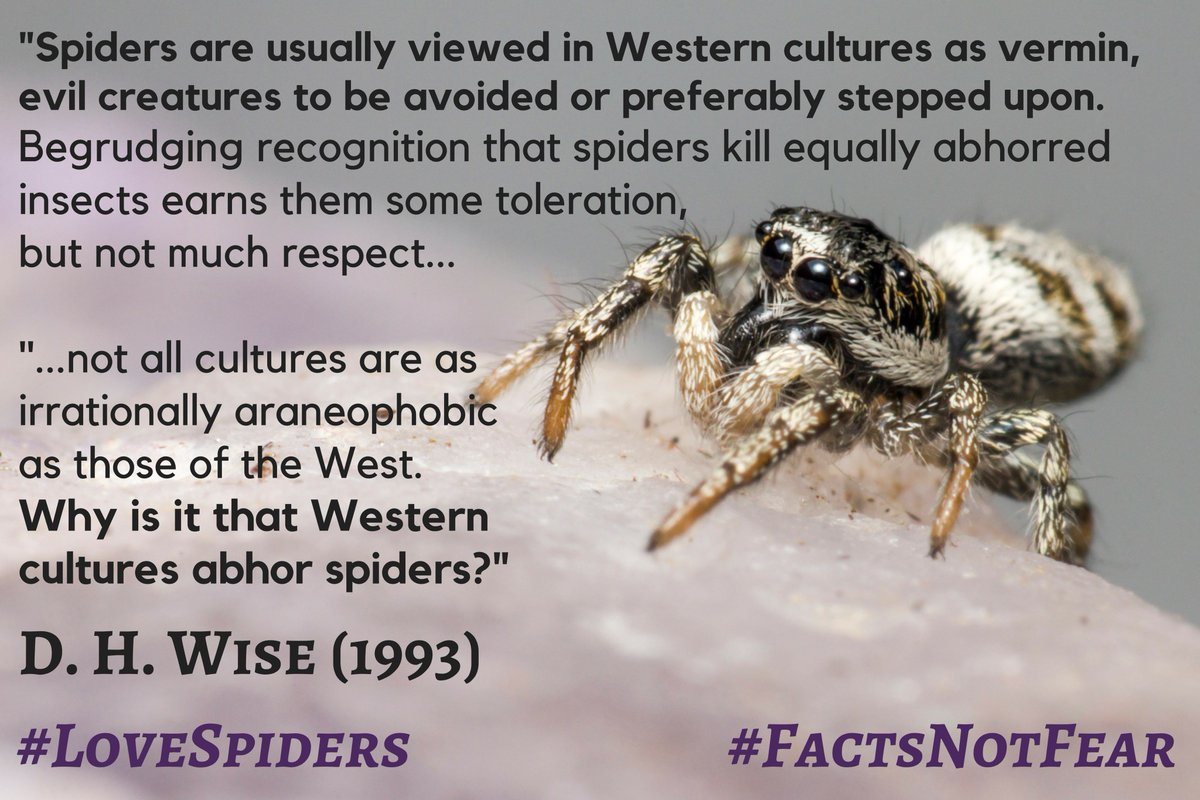 Fear of spiders is so ingrained in Western cultures that its easy for people to overlook how unusual this is to other cultures, many of which recognise value of spiders. Strange how countries (like UK) with no dangerous species foster needless fear. #LoveSpiders #FactsNotFear