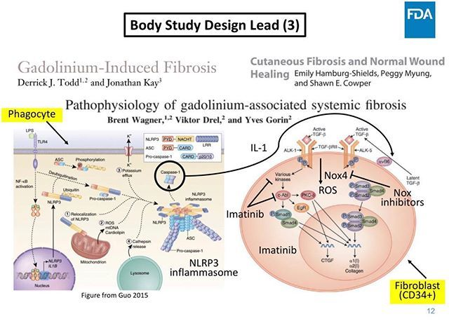 Gadolinium reservoirs (skin, bone) and 'nephrogenic' systemic fibrosis