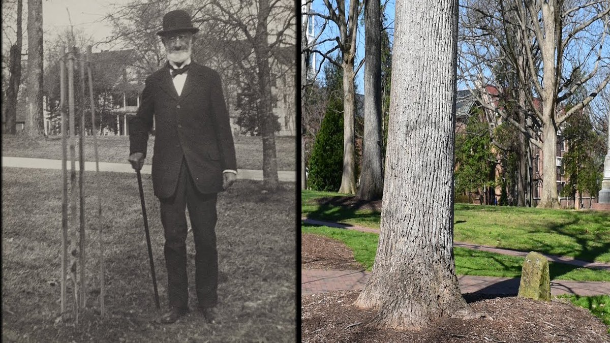🌳 David Poplar Thread 🌳 In the middle of McCorkle Place stands perhaps the oldest symbol of life at #UNC – Davie Poplar. Today we're taking a look at the most iconic tree on campus and the legends surrounding it: https://t.co/bvVorxUeBz https://t.co/oJmGJSCTTU