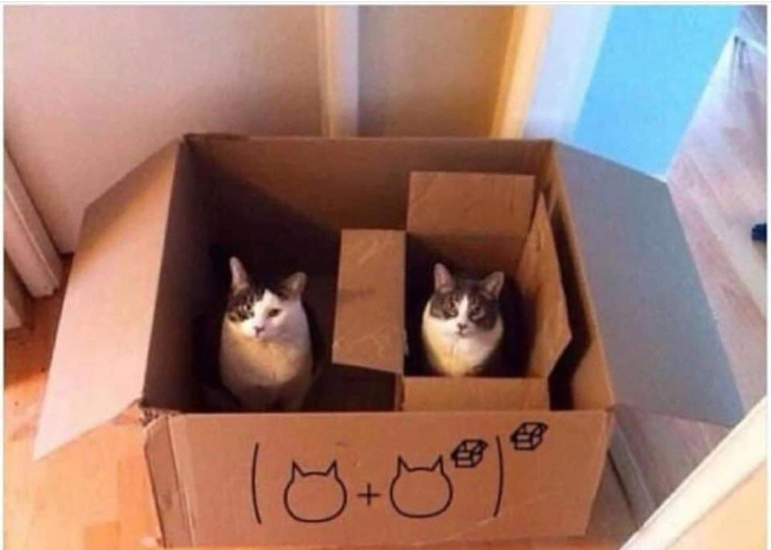 Schrödinger, tenemos un problema... #Gat...
