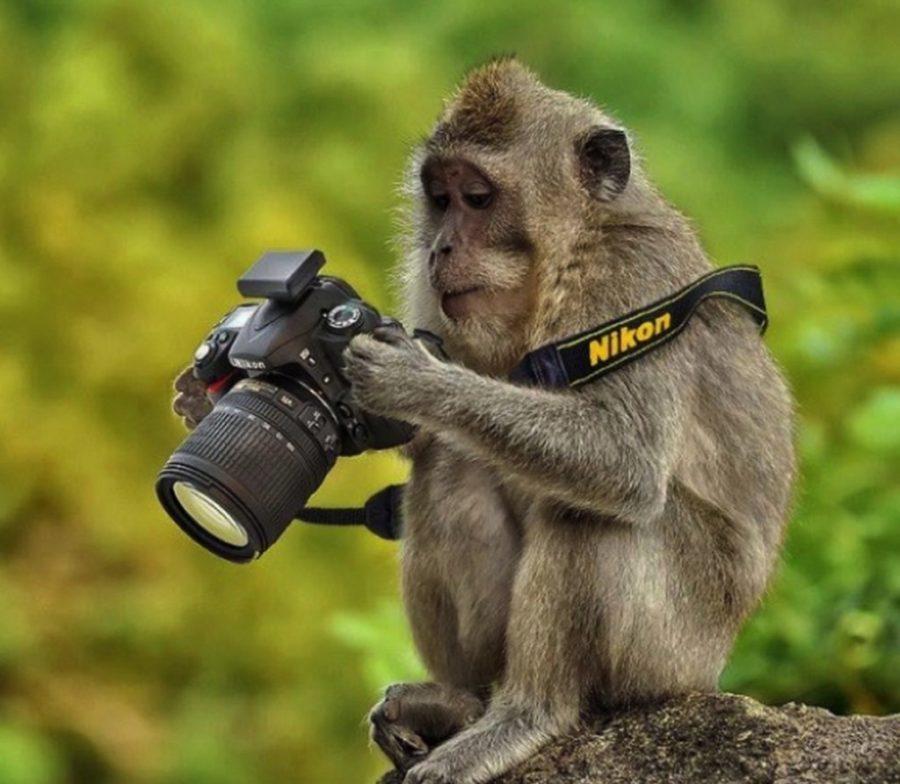 Стихах доброй, прикольные картинки фотоаппаратом