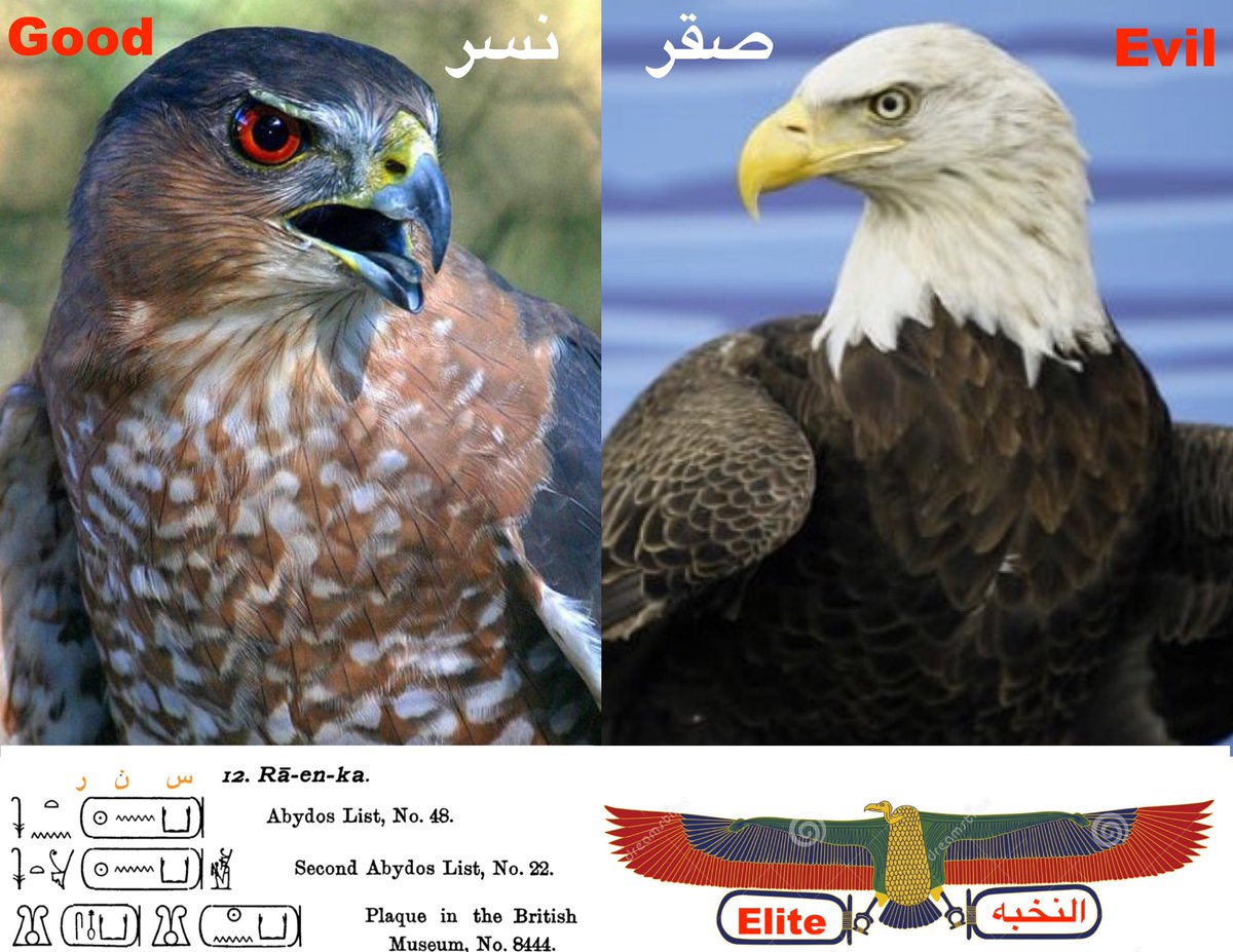 On Twitter In Ancient Egypt Falcon Represent The Elite
