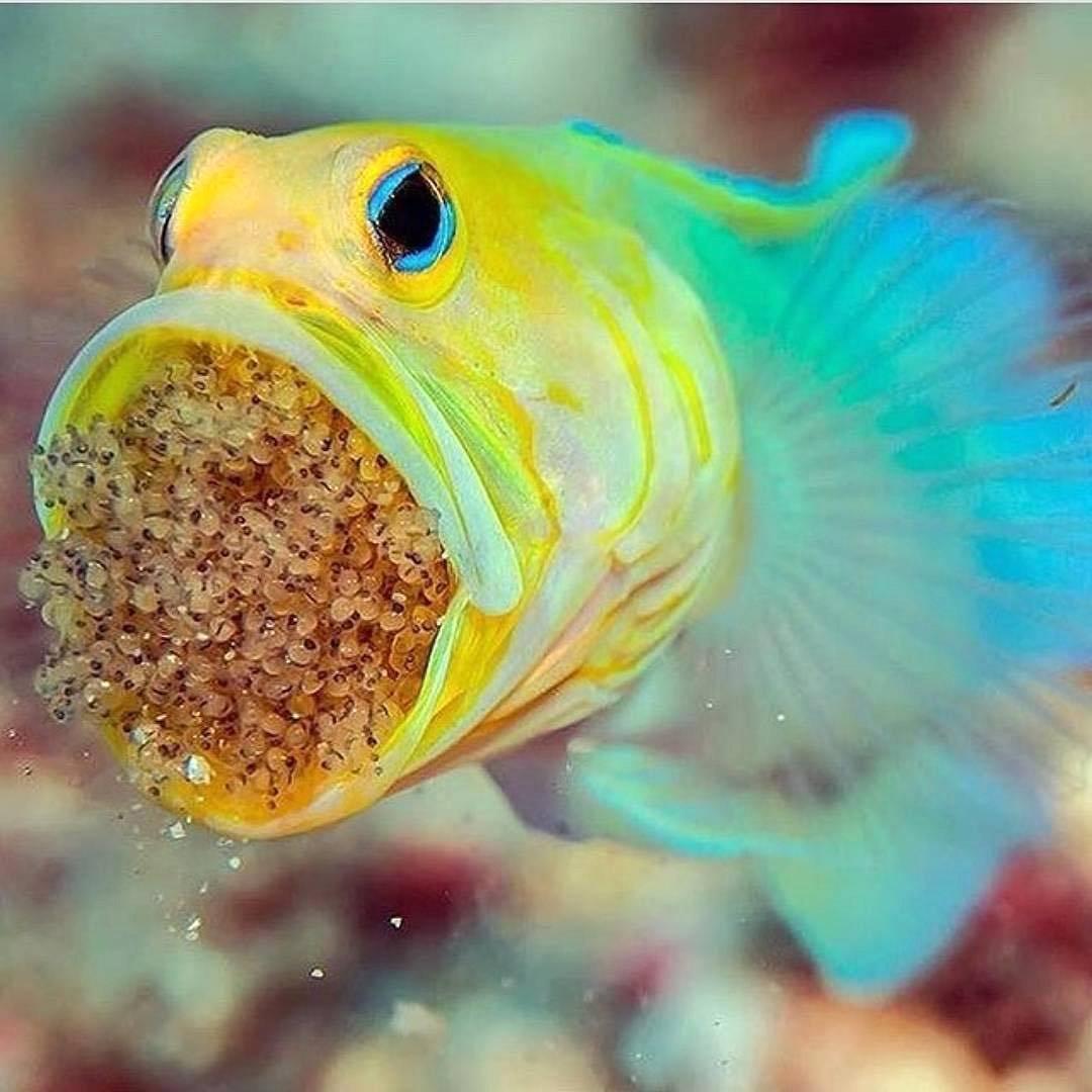 Картинки смешной рыбы, ничего