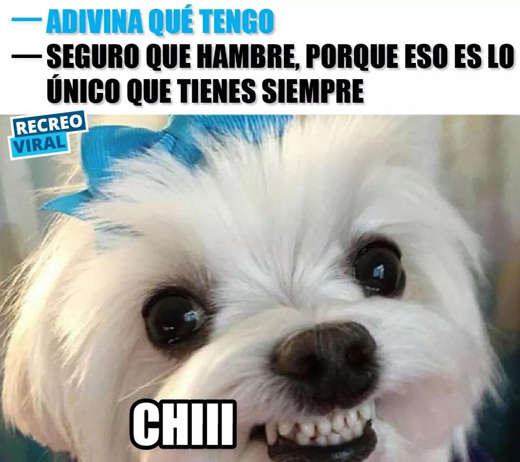 #ElMejorMemeQueHeVisto  Chi jajaja ! Jaj...
