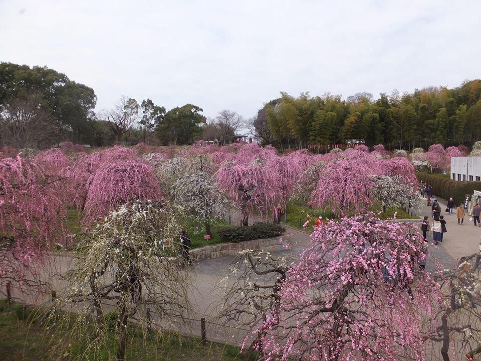 大場宏朋's photo on 花粉症