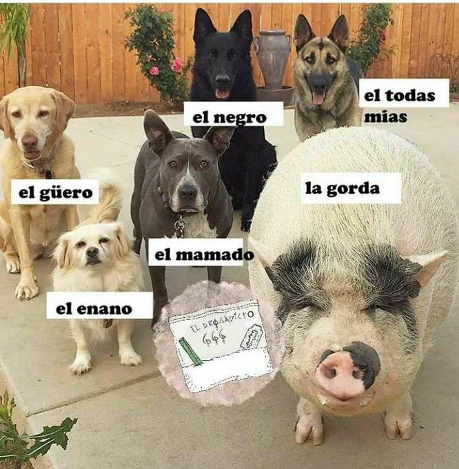 #TeSobraBarrio twitter.