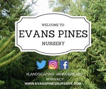 Evans Pines Nursery On Twitter
