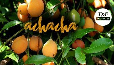 achachairú hashtag on Twitter