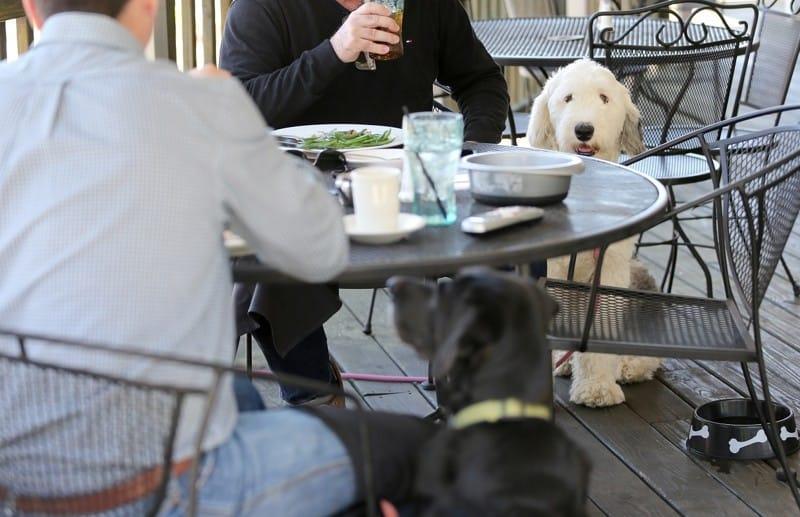 Calling all dog lovers! 🐶 💕 https://t.co/dVZmyorTtu https://t.co/3uumCKl4wW
