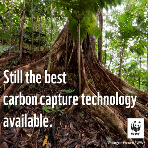 #RT Still the best #carboncapture technology available. #ForestsMatter for #ClimateAction panda.org/forestclimate