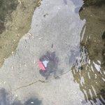 やっちまったwカニにしかも水の中にポケットWifi持って行かれたw