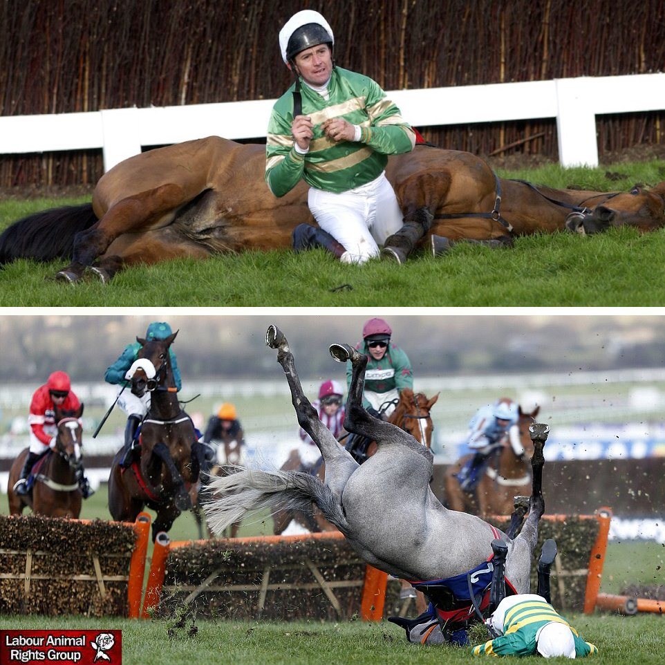 Two horses have already died on day one of the #CheltenhamFestival Mossback and Report to Base both only 6 years old were put down after falls. RETWEET if you agree that the cruelty suffered by these horses must stop. #YouBetTheyDie bristolpost.co.uk/sport/other-sp…