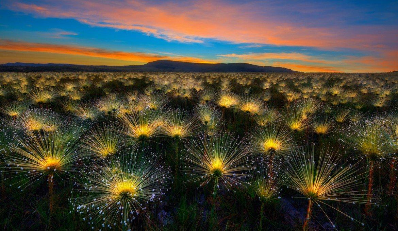 Estas son las mejores fotos de botánica del año #YGPOTY:  https://t.co/DQdfgsIdcv (En la imagen, la ganadora del certamen)