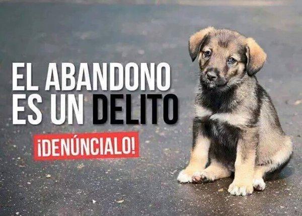 ¿Sabías que el maltrato y abandono de animales en un #DELITO? Si sabes de algún caso: denúncialo #091 #Colabora