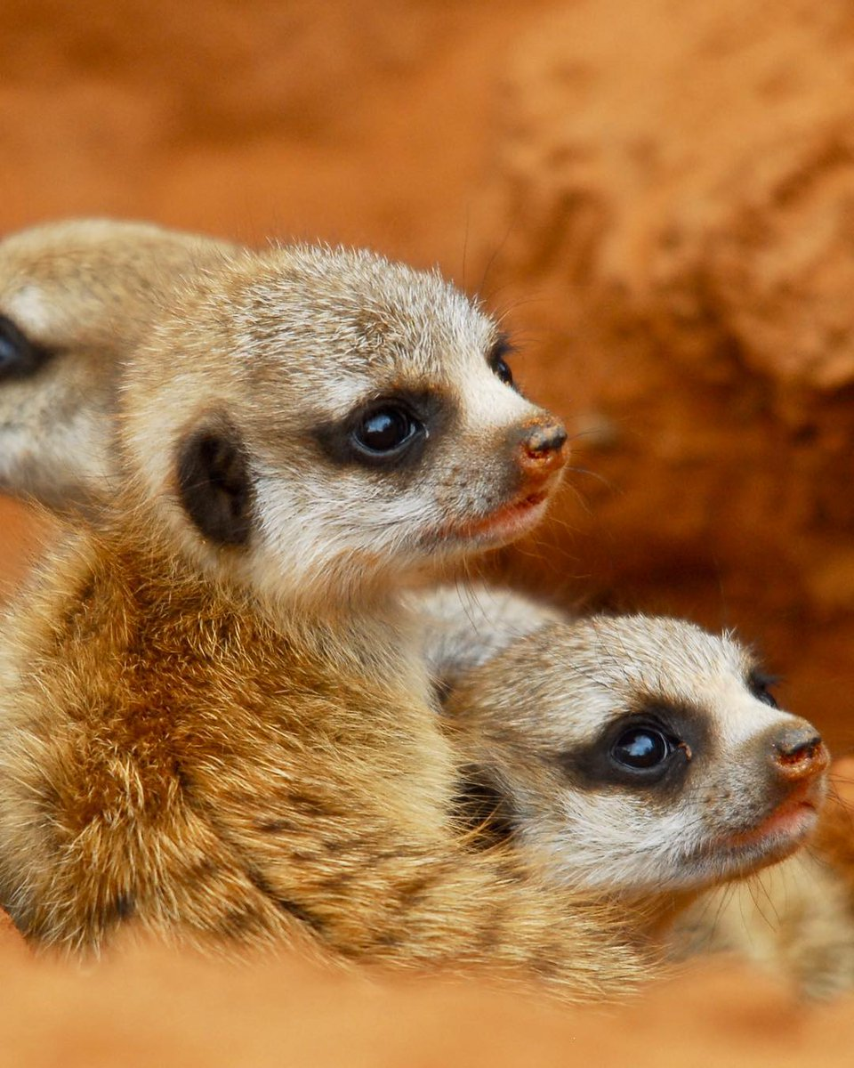 South Australia On Twitter Can You Even Handle The Cuteness