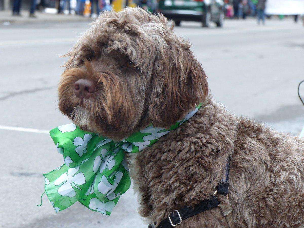 Dogs + St.Patrick's Day + Ottawa = Cuten...