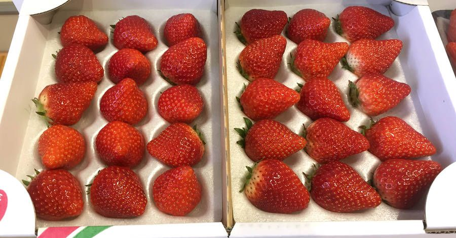 Move over Dokdo and comfort women. Strawberries are the new flash-point in Japan-Korea relations. Hilarious story on the berry nationalists from @AlastairGale  https://t.co/JTDeGHsozp