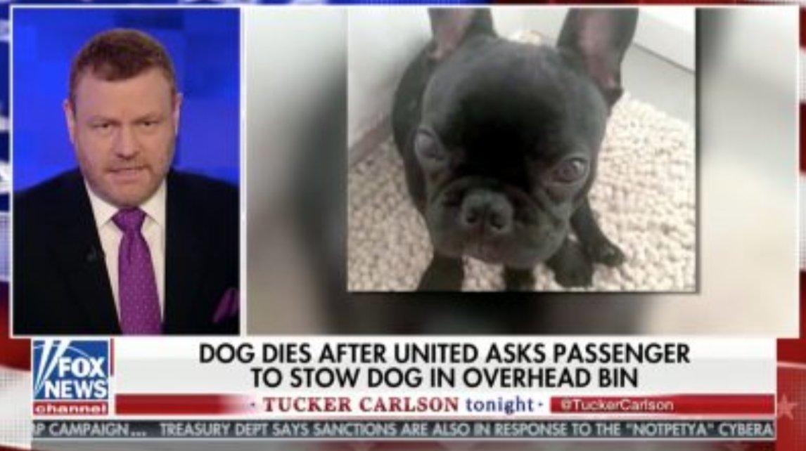 Mark Steyn Asks If Dog Dying on Flight Means a Flight Attendant Wouldn't Hear 'Guy Going Allahu Akbar' https://t.co/GRxfZL7Erf (VIDEO)